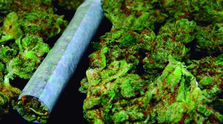 Los nuevos usos medicinales del cannabis han hecho crecer su popularidad